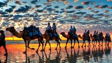 camels Essaouira